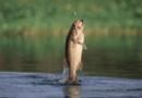 bass game fishing