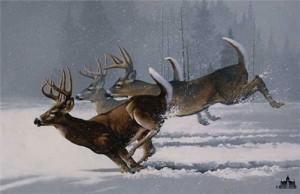 whitetail-deer-10