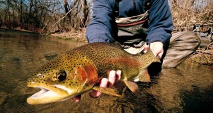 Get A Quick, Hassle-Free Online Fishing Licence